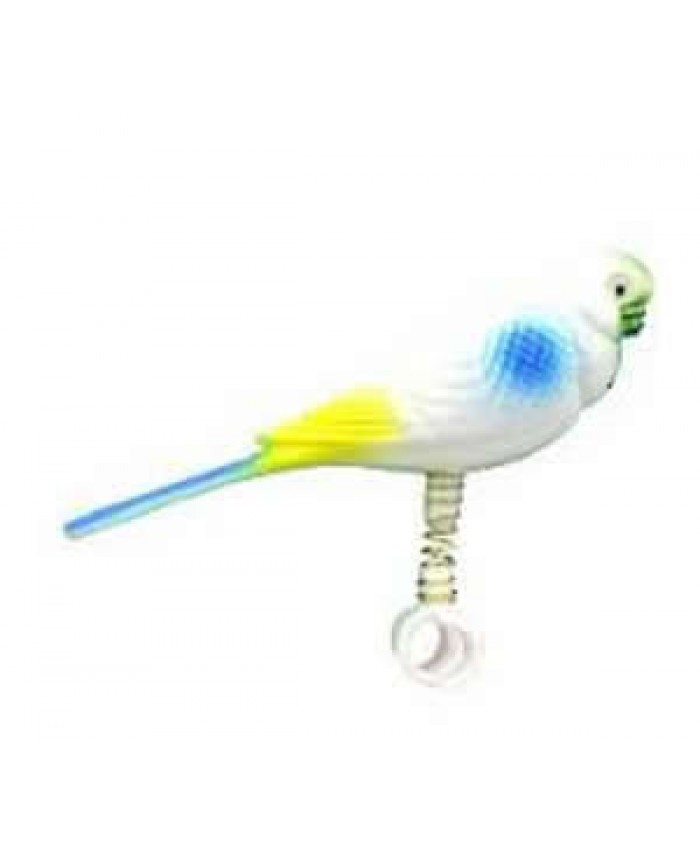 Parakeet on Spring Toy